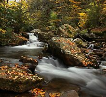 Little Stony Creek by Amy Jackson