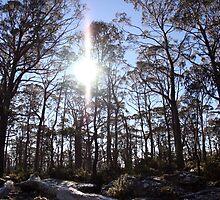 Ben Lamond National Park, Tasmania by jwatson