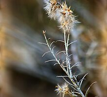 Winter's Gentle Glow by Vicki Pelham