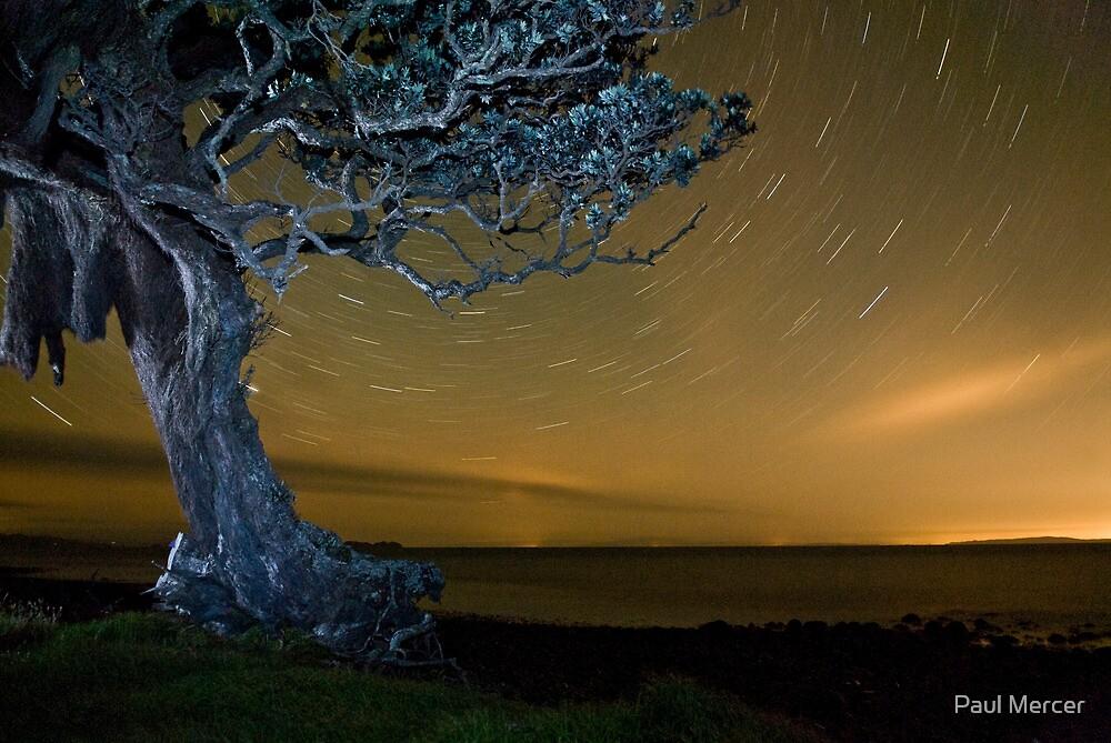 Pohutukawa at night by Paul Mercer