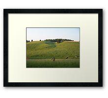 Cows grazing Framed Print