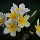 White Yellow Beauty by Keith G. Hawley