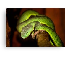 Deadly Beautiful Canvas Print