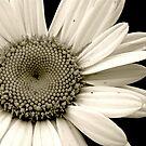 Delicate Beauty by AshtonR26