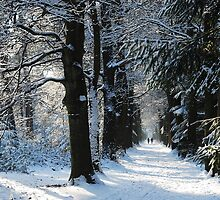 Walking on towards a White Christmas by jchanders