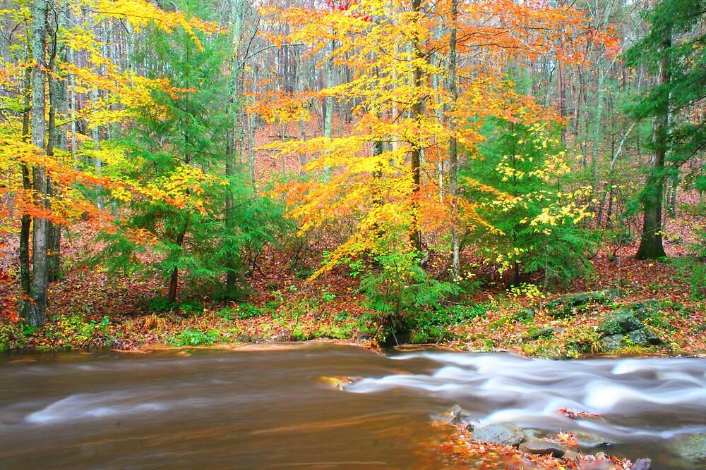 Sumac Creek  by AngelRivera