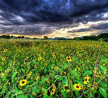 Darkness and Sun...Flowers by Bob Larson
