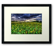 Darkness and Sun...Flowers Framed Print