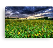 Darkness and Sun...Flowers Canvas Print