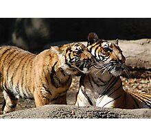 Malayan Tigers Photographic Print