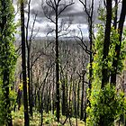 Kinglake by Chris Muscat