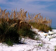 Ft. DeSoto Beach, As The Royal Terns by NatureGreeting Cards ©ccwri