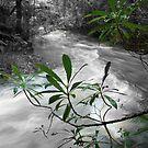 Green stream by Lee Popowski