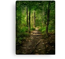 The Hidden Trails of the Old Forests Canvas Print