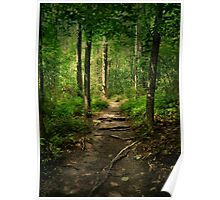 The Hidden Trails of the Old Forests Poster