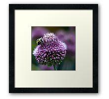 bumblebee deli Framed Print