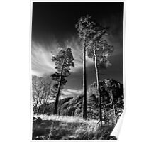 Thirlmere Trees Poster