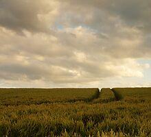 Crop field weathering storm... by Simon Perkin
