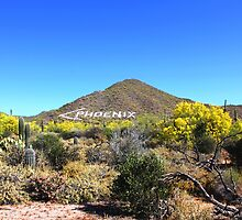 USERY MOUNTAIN REGIONAL PARK ARIZONA APRIL 2015 by photographized