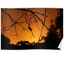 Dark Sunset Poster