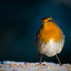 Christmas Robin by geoff curtis