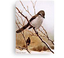 Northern Shrike Bird Canvas Print