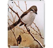 Northern Shrike Bird iPad Case/Skin