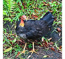 Wild Turkey Photographic Print