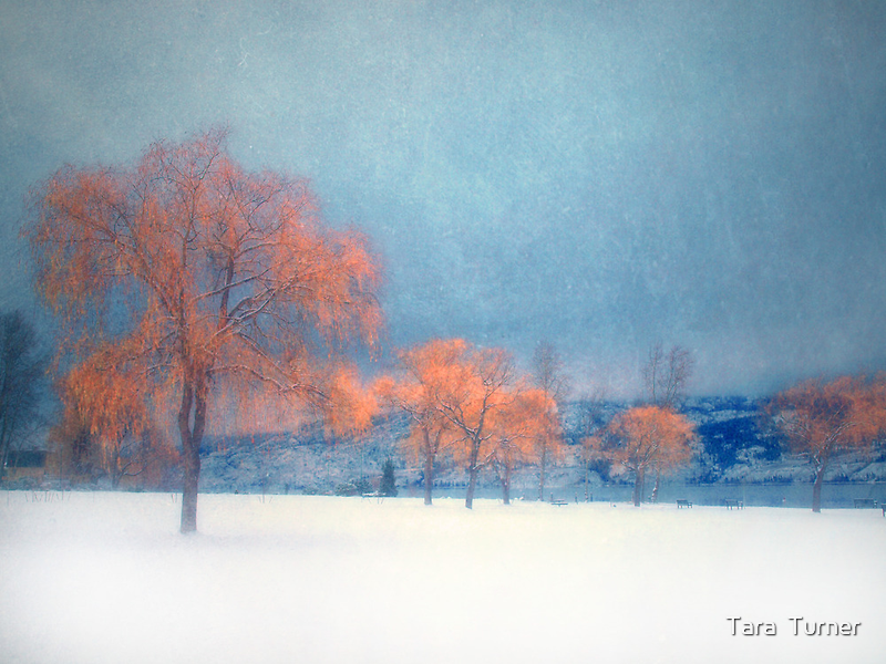 The Winter Blues by Tara  Turner