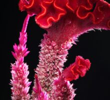 Deep pink flower with wave petals Sticker