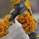 Fungi Folk - NSW by CasPhotography