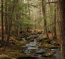 Wolf Tree Walk, New Hampshire by brooke1429