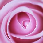 Flower: Pink Rose by adpixels