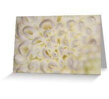 Flower: Ping Pong Chrysanthemums Greeting Card