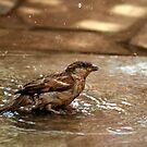 Sparrow  by anandbakshi