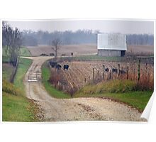 Country lane through the field Poster