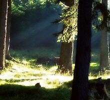 strolling through the woods by MarAndra