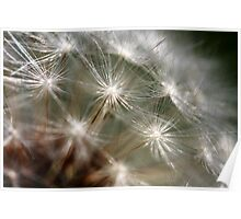 Dandylion Seeds Poster