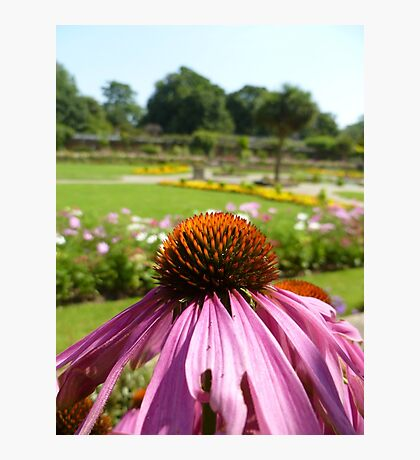 In A Beautiful Garden Photographic Print