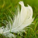 Feather laying in the grass by retouch