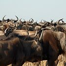 A sea of horns by Paulo van Breugel