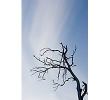 Reach For The Sky Photographic Print