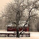 Red Snow by baraka fadi