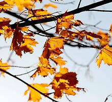 Autumn leaves by lenroc