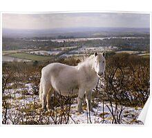 Dartmoor: Snowy White Poster