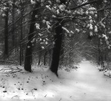Winter Walk ~ Hossler's Trail by Lori Deiter