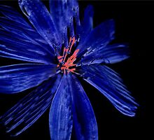 Blue series I ... by sendao