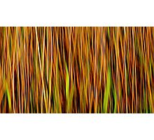 Grasslands #2 Photographic Print