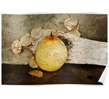 White Chinese Pear Poster