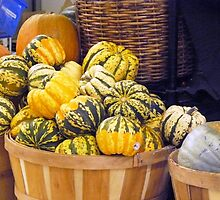 Bountiful Squash by Margie Bates